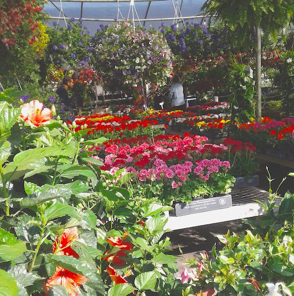 Atwater flower market