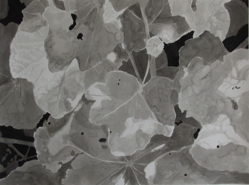 Light & Shadow on Hollyhock leaves copy
